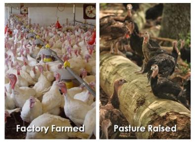 turkey-comparison