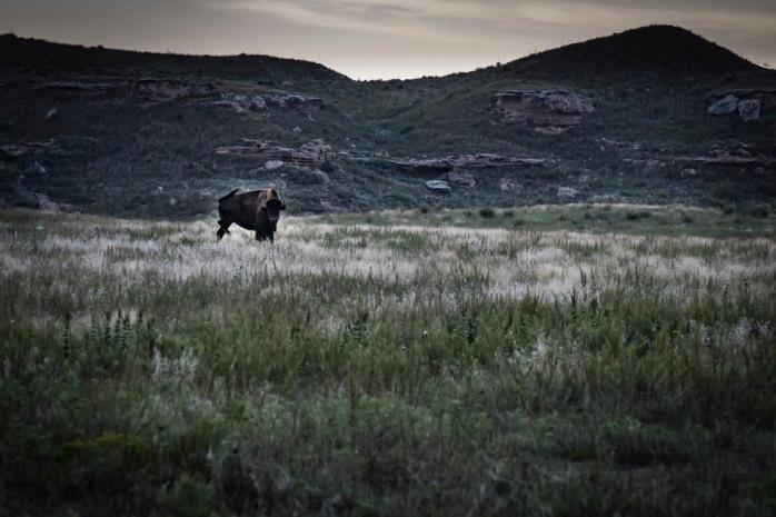 buffalo, cropped, field, fishing lake, grasslands, K-95, Kansas outdoors, Lake Scott State Park, prairie, recreation, remote, Scott City, September, spring-fed lake, State Park, sunset, US-83, USA, Western Kansas